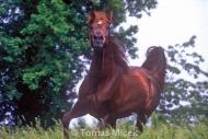 HORSES_2_059