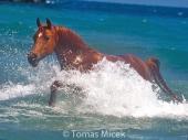 HORSES_2_060