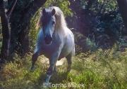 HORSES_2_062