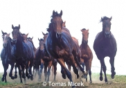 HORSES_2_063