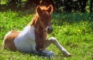 HORSES_2_064