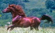 HORSES_2_065