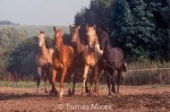 HORSES_2_066