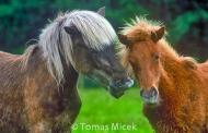 HORSES_2_067