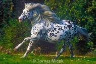 HORSES_2_068