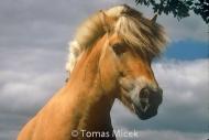 HORSES_2_069