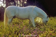 HORSES_2_070