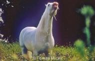 HORSES_2_071