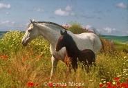 HORSES_2_072