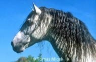 HORSES_2_074