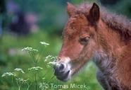 HORSES_2_075