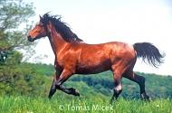 HORSES_2_076