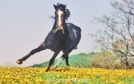 HORSES_2_077