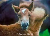 HORSES_2_080