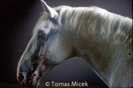 HORSES_2_081