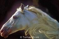 HORSES_2_082
