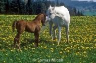HORSES_2_083