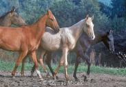 HORSES_2_084