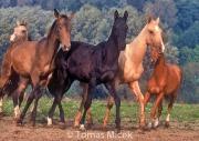 HORSES_2_085