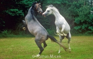 HORSES_2_086