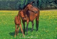 HORSES_2_087