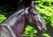 HORSES_2_088