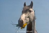 HORSES_2_089