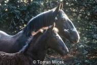 HORSES_2_090
