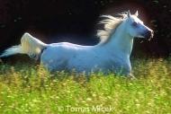 HORSES_2_091