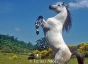 HORSES_2_092