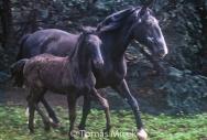 HORSES_2_093