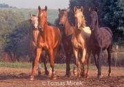 HORSES_2_094