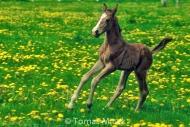 HORSES_2_095