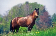 HORSES_2_097