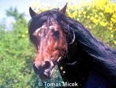 HORSES_2_098