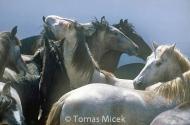 HORSES_2_099