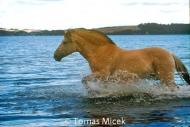 HORSES_2_100