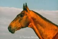 HORSES_2_101