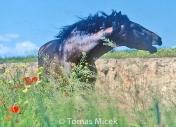HORSES_2_102