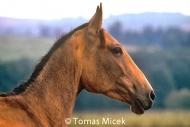 HORSES_2_103