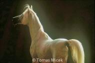 HORSES_2_105