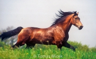 HORSES_2_106