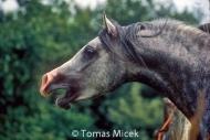 HORSES_2_107