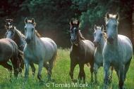 HORSES_2_108