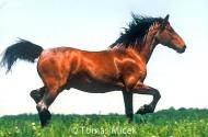 HORSES_2_109