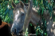 HORSES_2_111