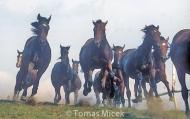 HORSES_2_112