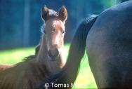 HORSES_2_113