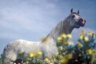 HORSES_2_114
