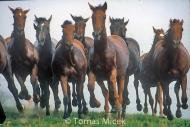 HORSES_2_115